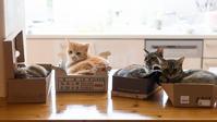 みんな、おはよう - 猫と夕焼け
