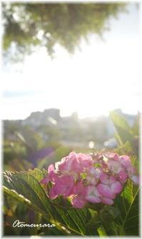 公園 朝散歩 7.3  - 日々楽しく ♪mon bonheur