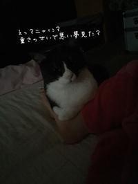 幸せな悪夢 - 亜麻仁