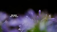 愛の花 VOL.03 - 君に届け