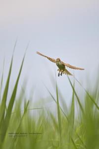 梅雨本番の時期です - healing-bird