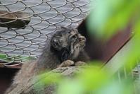 王子動物園 ペッキー - どうぶつたちと私
