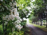 7月3日 今日の写真 - ainosatoブログ02