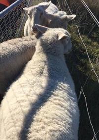 田舎暮らしの緊張感 - みつばちとニュージーランドで暮らす PicoMiere
