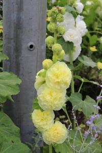 電柱隠しと黄色つながり♪ - HOME SWEET HOME ペコリの庭 *