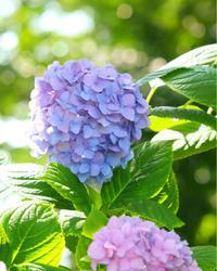 21日間遠隔ヒーリングのご感想をいただきました。 - 神戸市垂水区 Petit Lapin~プチ・ラパン~