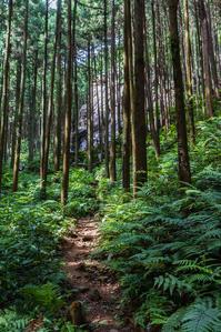 日和田山への散歩 - デジカメ写真集