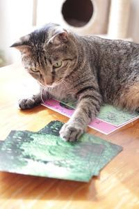 わんニャン倶楽部特別編「サチと仲間たち」が放送されます - きょうだい猫と仲良し暮らし
