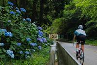 六甲山アジサイパトロール - My Cycling Diary