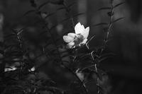 モノクロームな夕方(5cut) -     ~風に乗って~    Present