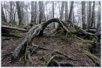 標高2100メートルの原生林(白駒池) - コバチャンのBLOG