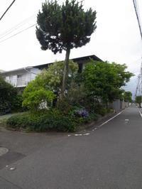 庭の成長 - 早田建築設計事務所 Blog