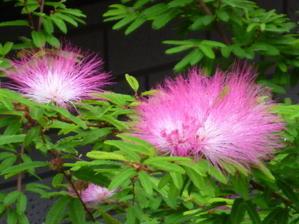 ねむの花 -