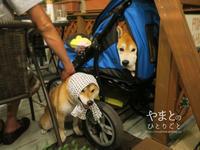 柴犬と飲茶とビール - yamatoのひとりごと