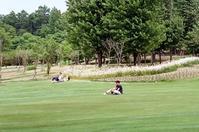 芝生を渡る風を楽しむ人々 - 照片画廊