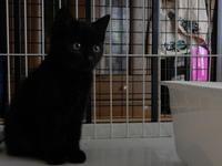 保護生活 - 愛犬家の猫日記