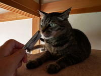 目に見える化で楽しさ倍増 - ご機嫌元氣 猫の森公式ブログ