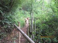道打ち - 宮迫の! ようこそヤマボウシの森へ