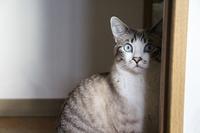 順番待ち - ぎんネコ☆はうす