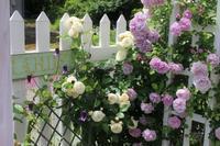 色々出てます♪ - HOME SWEET HOME ペコリの庭 *