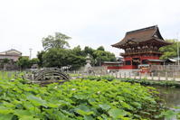 伊賀八幡宮(岡崎市) - さんたの富士山と癒しの射心館