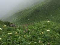17年北のプー生活(68)…3回目の礼文島 - ふぉっしるもしてみむとてするなり