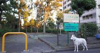 Vol.1204 京町第4公園 - 小太郎の白っぽい世界