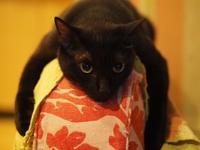 猫飼いのための猫ポートレンズで6歳の猫を撮りました - azukki的.