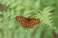いつもと違う高原の雰囲気 - 蝶超天国