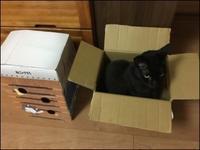 猫だってこだわりがある - あずきのばあばの、のんびり日記