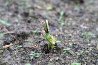 豆ときどき晴れ - 良え畝のブログ