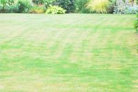 7/4 雨の合間の芝刈り - 「あなたに似た花。」