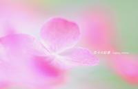 一家団欒 - 花々の記憶