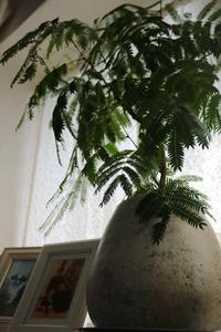 コロンとしてる - CHIROのお庭しごと