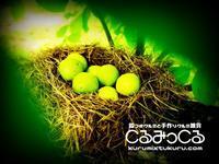 なんの卵? - くるみ農家がはじめた殻つきクルミと胡桃雑貨のネットショップくるみっくるのブログ「くるくるくるみ生活」