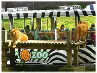 多摩動物公園のライオンバスと上野動物園のパンダ  - nazunaニッキ