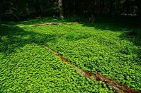 緑の絨毯 - 風の香に誘われて 風景のふぉと缶