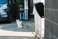 美人なネコ - BobのCamera