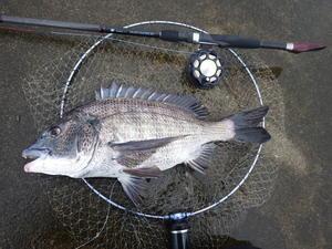 4日と5日の釣り -