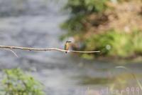 Kingfisher - のんびり行こうよ人生!