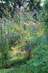 我が家のグランドカバー - HOME SWEET HOME ペコリの庭 *
