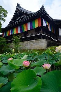 蓮と桔梗と紫陽花@智積院 - デジタルな鍛冶屋の写真歩記