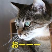 にゃんこ劇場「おはようにゃん」 - ゆきなそう  猫とガーデニングの日記