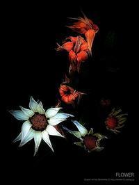 FLOWER 2 - Illusion on the Borderline  II @へなちょこ魔術師
