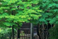 新緑ならぬ深緑 - MAKO'S PHOTO