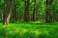 奥日光の深い森 - 風の香に誘われて 風景のふぉと缶