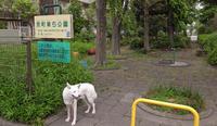 Vol.1205 京町第5公園 - 小太郎の白っぽい世界