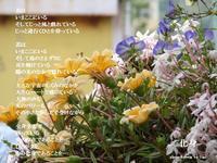 化身 - 花の咲み、花のうた、きらめく地上 ―― photo&poem gallery kannon花音
