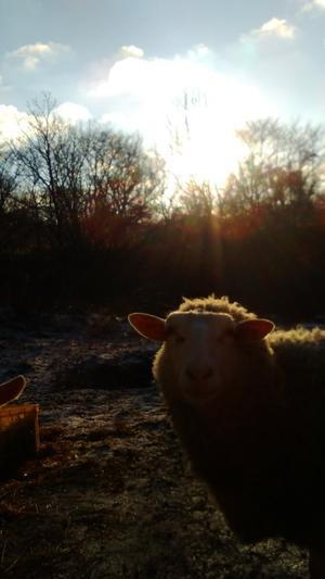 IL RICOTTAROのホームページが出来ました! - 旧・羊と山羊と小さな工房「イル・リコッターロ」公式ブログ