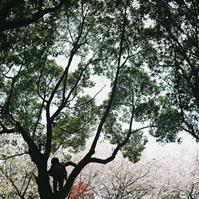 自然との距離 - 果実な日々